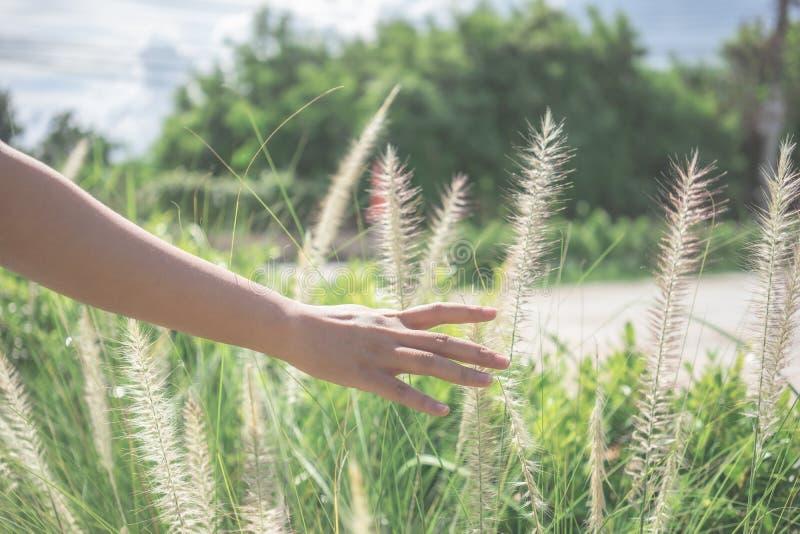 Mão bonita da mulher que toca na grama no campo de grama que dá o sentimento do abrandamento, do abrandamento e da liberdade no m imagens de stock royalty free