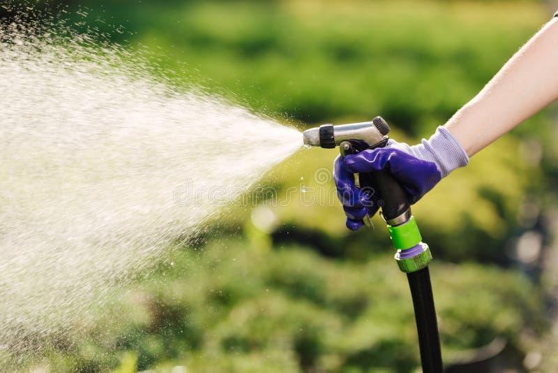 Mão com as plantas molhando de mangueira de jardim, conceito de jardinagem do ` s da mulher fotos de stock