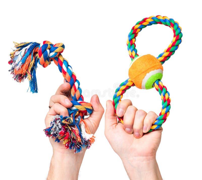 Mão com brinquedo do cão fotos de stock