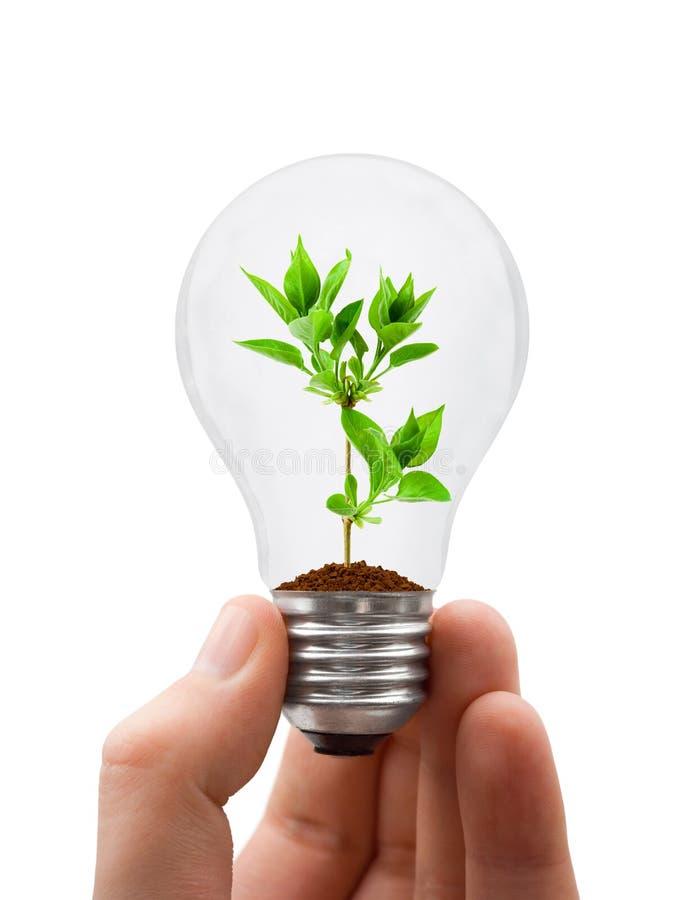 Mão com lâmpada e planta imagem de stock royalty free