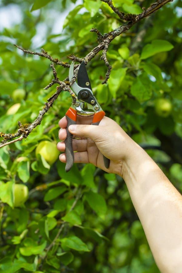 Mão com tesouras de jardinagem foto de stock