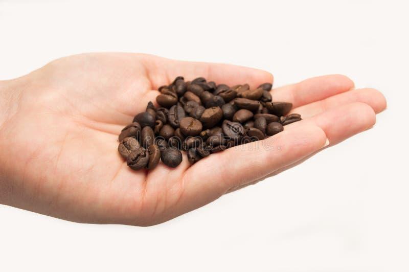 Mão completamente de feijões de café foto de stock