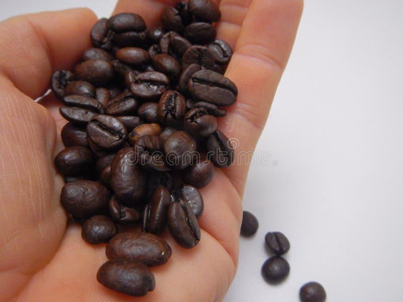 Mão completamente de feijões de café marrons foto de stock