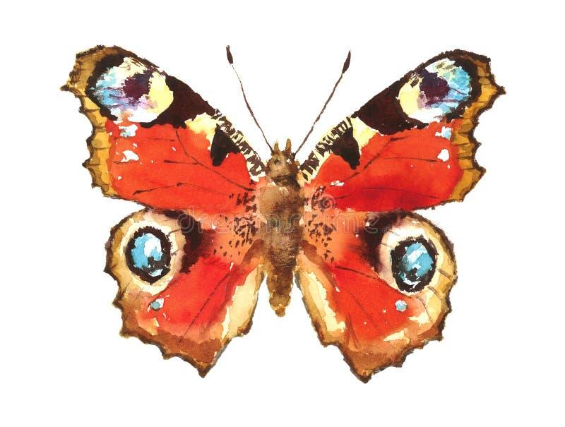 Mão da aquarela da borboleta de pavão tirada ilustração stock