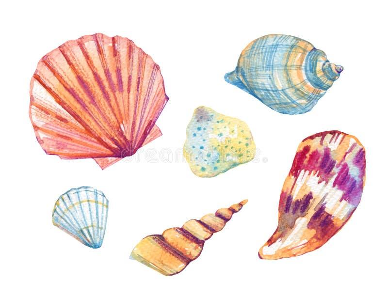 A mão da aquarela dos shell do mar tirada estilizou o grupo da ilustração ilustração do vetor