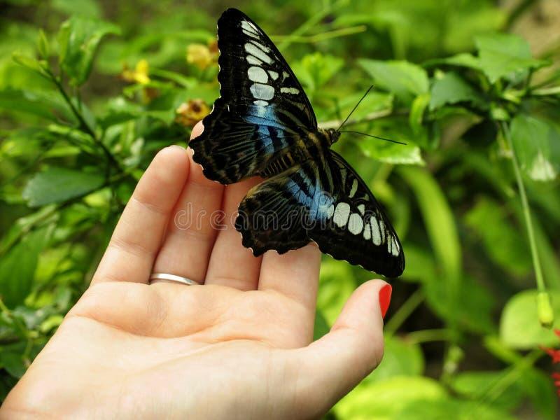 Mão da borboleta fotografia de stock