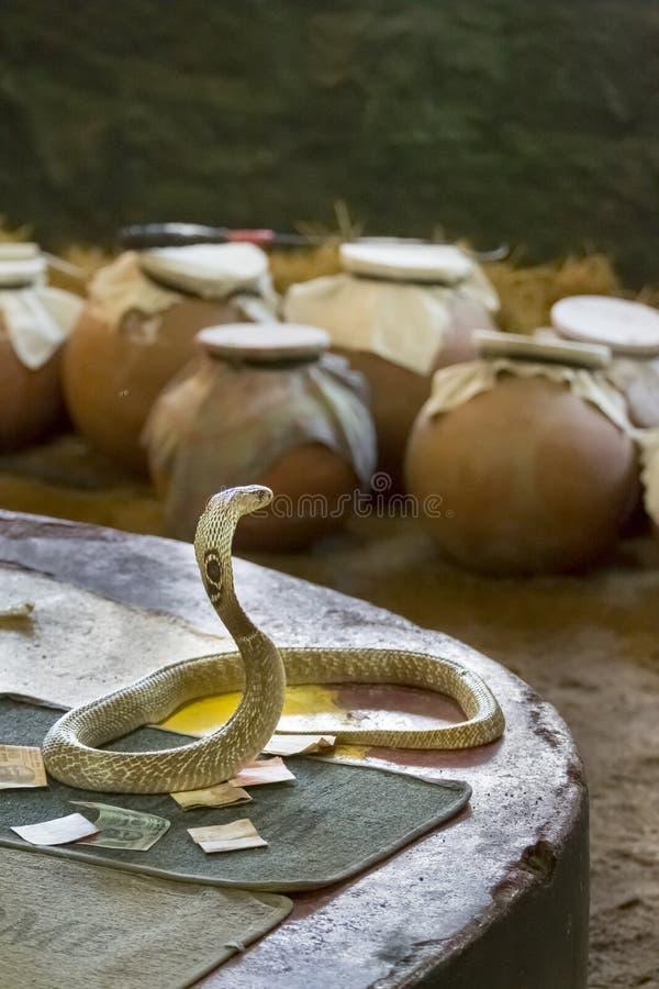 Mão da cobra da serpente imagem de stock royalty free