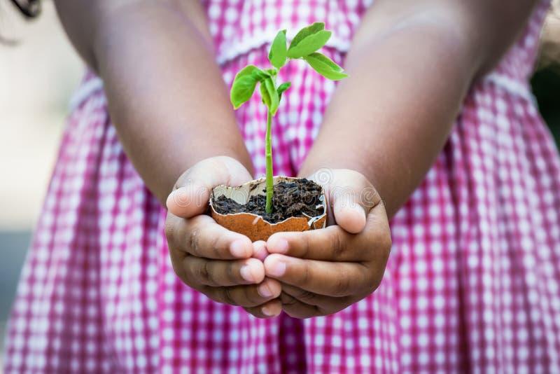 Mão da criança que guarda a árvore nova no shell de ovo fotografia de stock royalty free