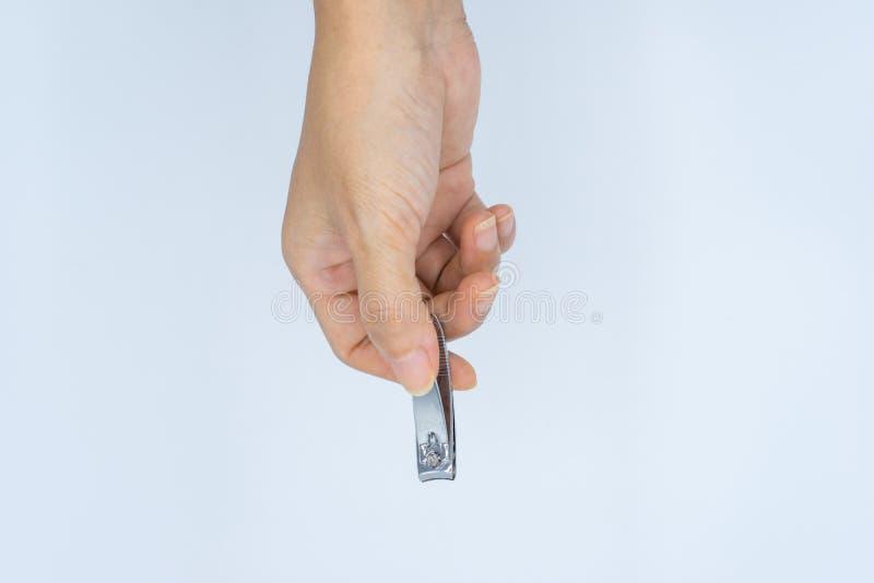 Mão da fêmea adulta que guarda a tosquiadeira de prego metálica no fundo branco fotos de stock