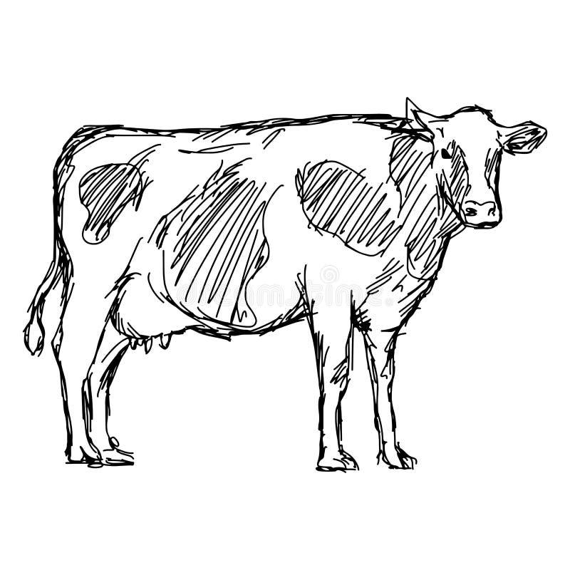 Mão da garatuja do esboço da ilustração do vetor da vaca tirada com linha preta ilustração do vetor