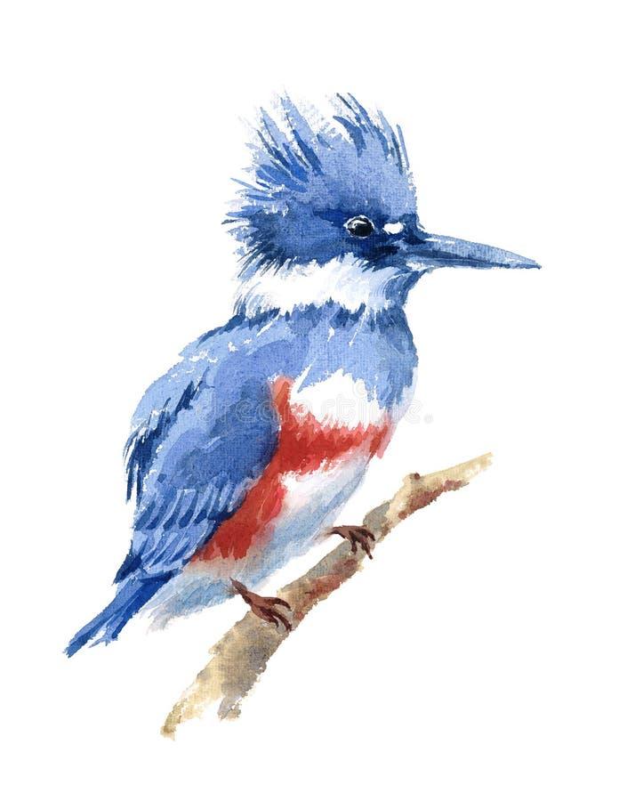 Mão da ilustração da aquarela do pássaro do martinho pescatore cercado tirada ilustração stock