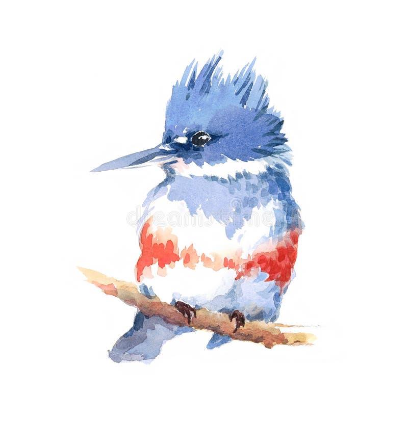 Mão da ilustração da aquarela do pássaro do martinho pescatore cercado tirada ilustração royalty free