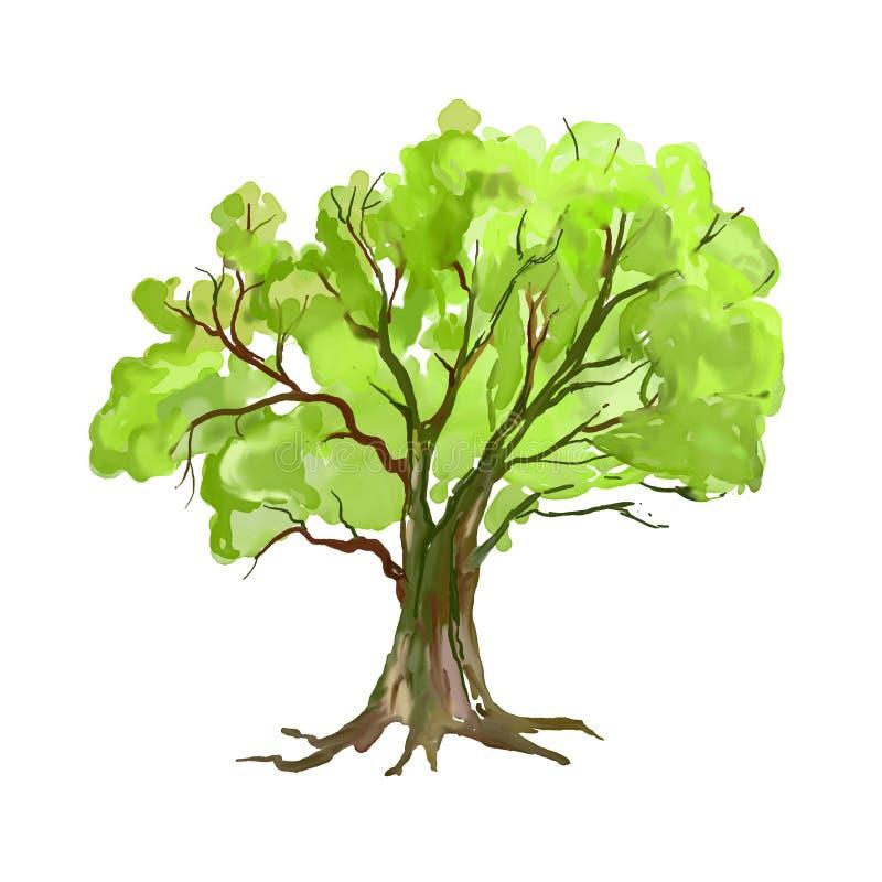 Mão da ilustração do vetor da árvore tirada pintada ilustração royalty free