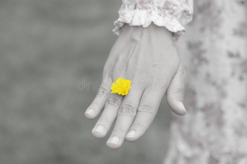 A mão da jovem mulher que veste a flor amarela representa da aliança de casamento fotografia de stock royalty free