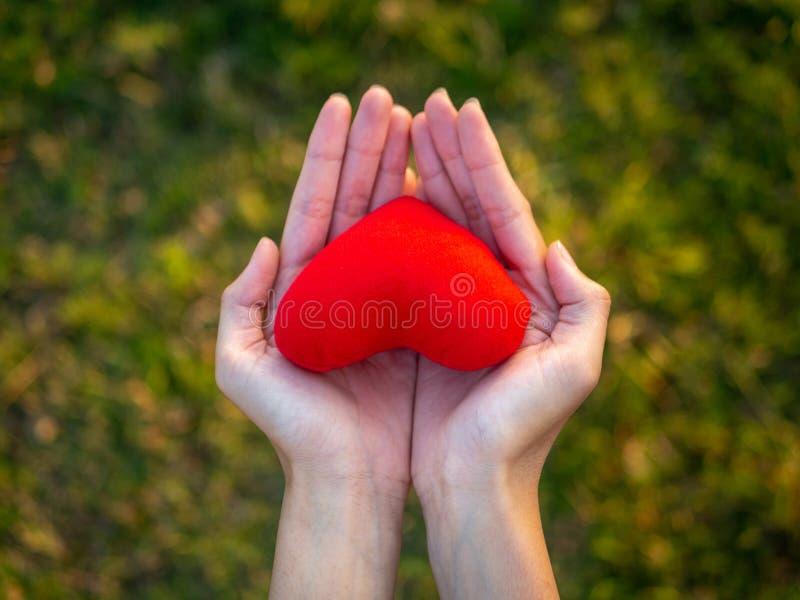 Mão da jovem mulher da vista superior que guarda o coração vermelho Feliz, amor, Valentine Concept imagens de stock