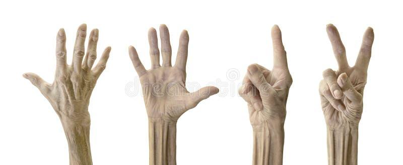 Mão da mulher adulta imagens de stock