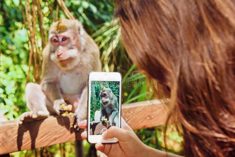 Mão da mulher com o telefone que toma a macaco a foto e o vídeo móveis foto de stock royalty free