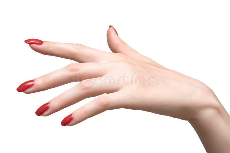 Mão da mulher elegante fotos de stock royalty free