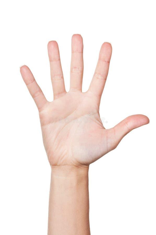 Mão da mulher (palma) fotos de stock royalty free