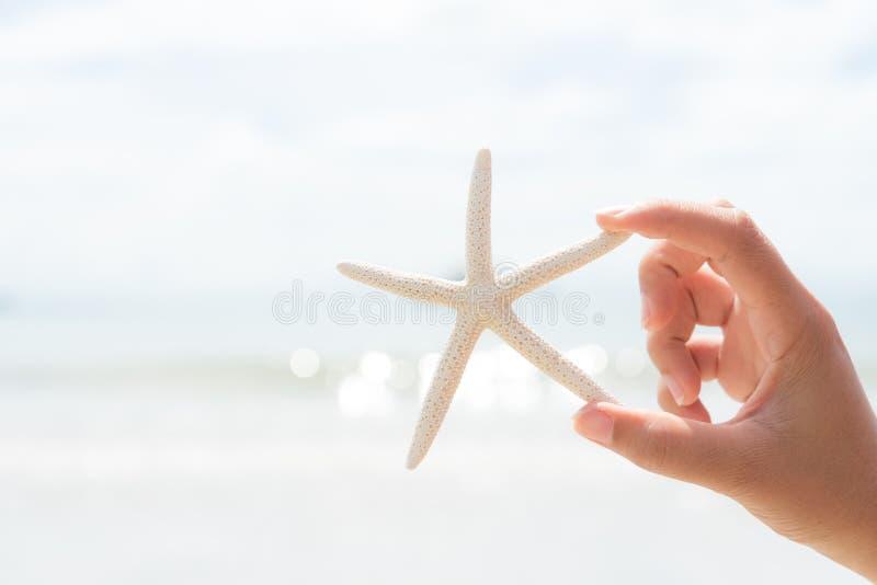Mão da mulher que guarda a estrela do mar sobre o mar e o Sandy Beach imagem de stock