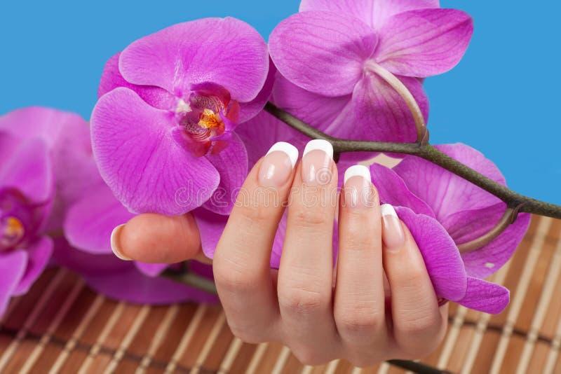 A mão da mulher que guarda flores roxas da orquídea imagem de stock