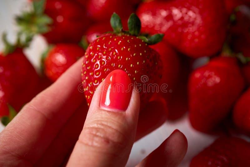 A mão da mulher que guarda a morango vermelha suculenta fresca na tabela branca imagem de stock