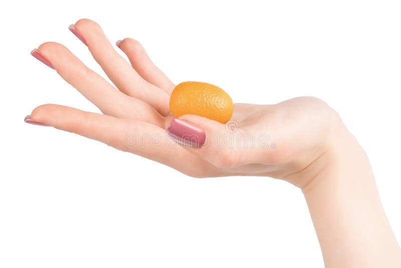 Mão da mulher que mantém o kumquat alaranjado pequeno isolado com grampeamento de p imagens de stock royalty free