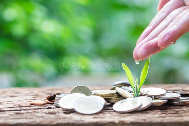 Mão da mão da mulher que molha uma planta do crescimento para lucrar a finança fotos de stock royalty free