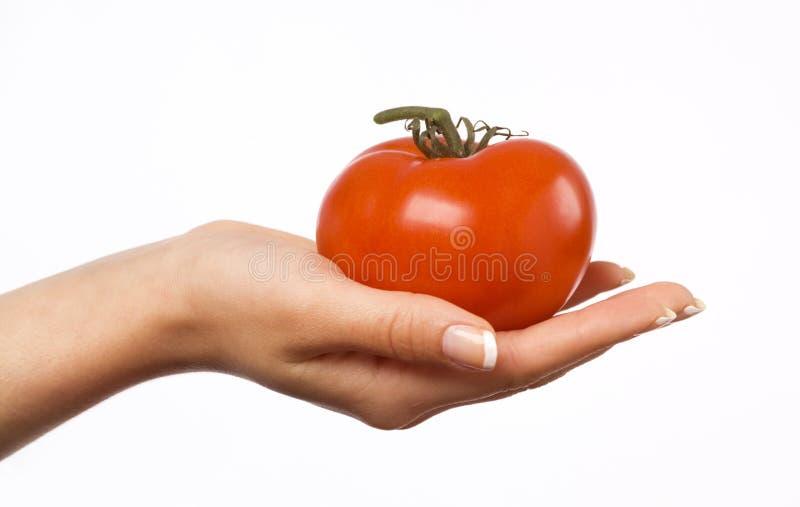 Mão da mulher que prende um tomate foto de stock royalty free