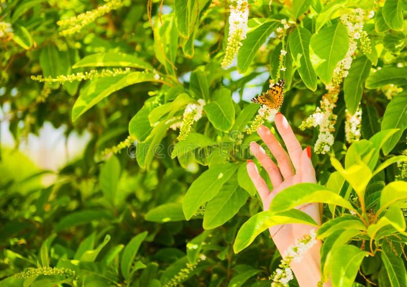 Mão da mulher que toca na borboleta imagem de stock royalty free
