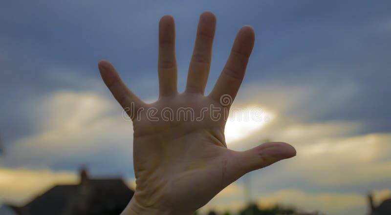 Mão da palma fotografia de stock