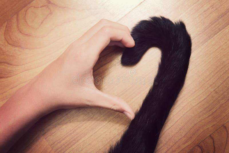 A mão da pessoa e uma cauda de gato que faz uma forma do coração fotografia de stock