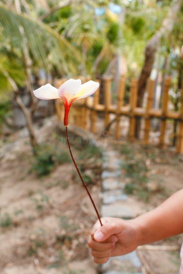 A mão das crianças guarda um pouco flor em uma vara imagens de stock royalty free