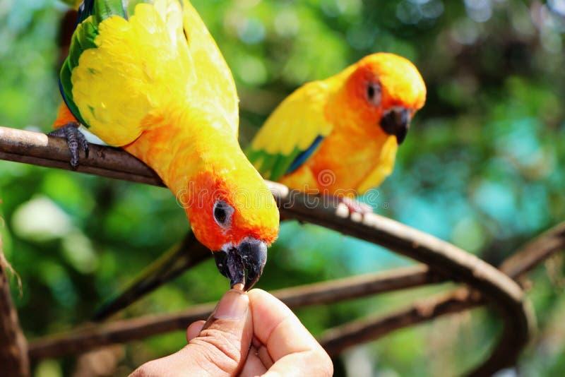Mão de alimentação do formulário do pássaro fotografia de stock royalty free