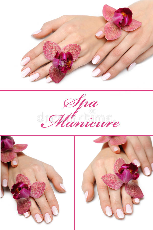 Mão de Collage.Beautiful com manicure perfeito imagem de stock