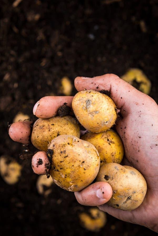 Mão de fazendeiros segurando boatos jovens sobre solo na fazenda imagem de stock royalty free