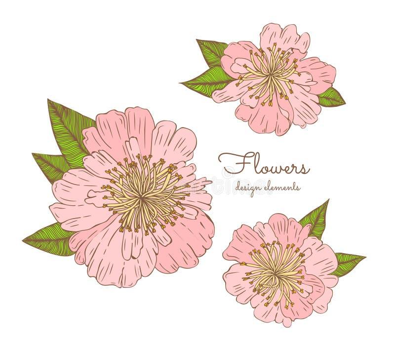 Mão detalhada as flores tiradas ajustaram - peônias de florescência Isolado no fundo branco Flores do vetor no estilo do vintage ilustração do vetor