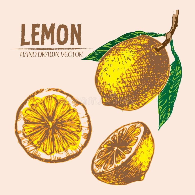 Mão detalhada do limão da cor do vetor de Digitas tirada ilustração do vetor