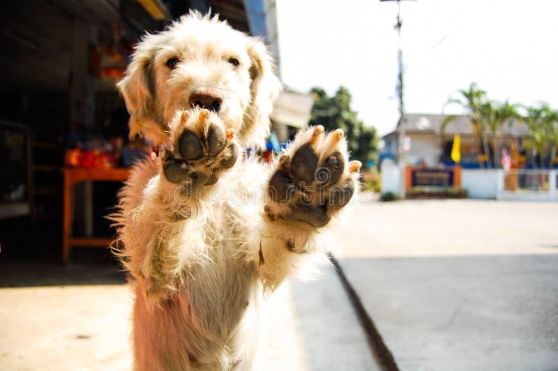 Mão do cão fotos de stock