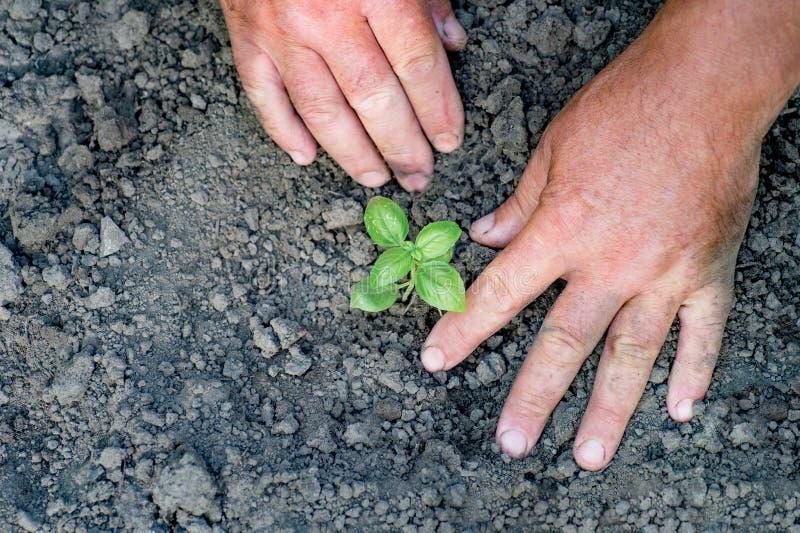 Mão do fazendeiro que planta a planta verde nova no uso do solo da sujeira para o peop imagem de stock royalty free