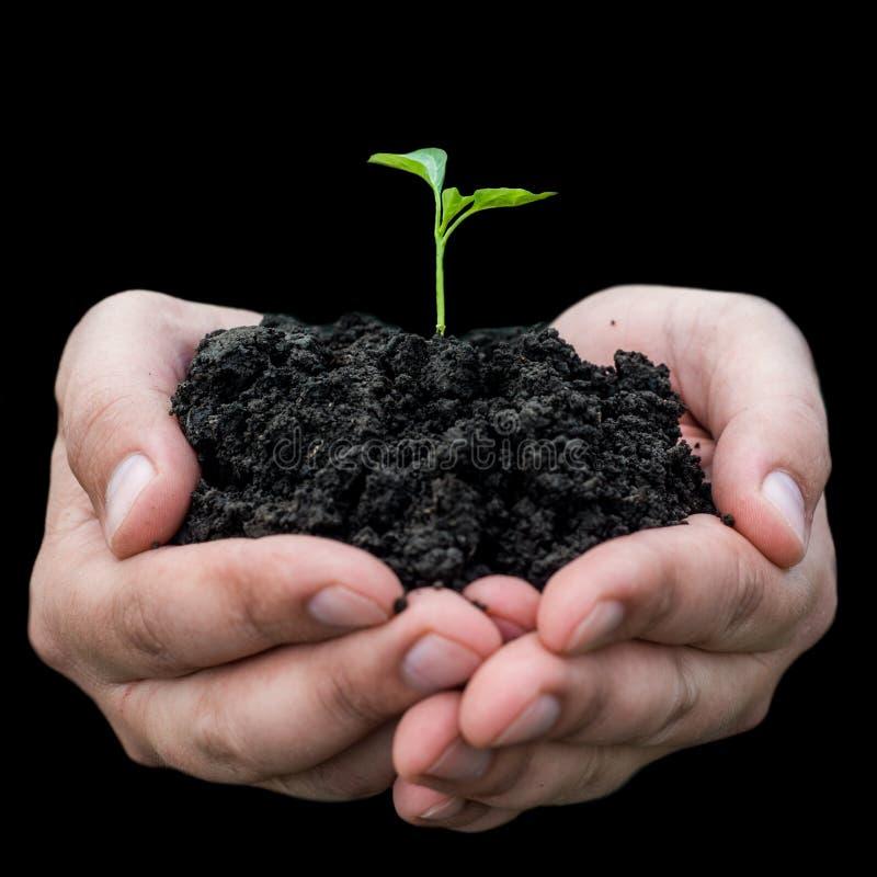 Mão do fazendeiro que prende uma planta nova fresca imagem de stock royalty free