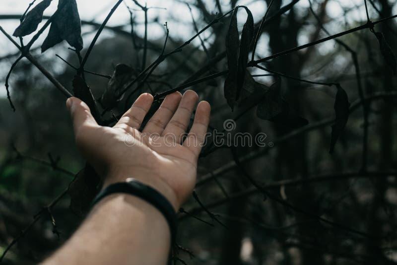 A mão do homem em ramos e em folhas de árvore imagem de stock royalty free