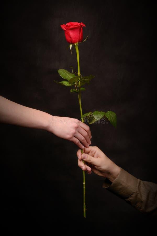 A mão do homem que dá uma rosa fotografia de stock royalty free