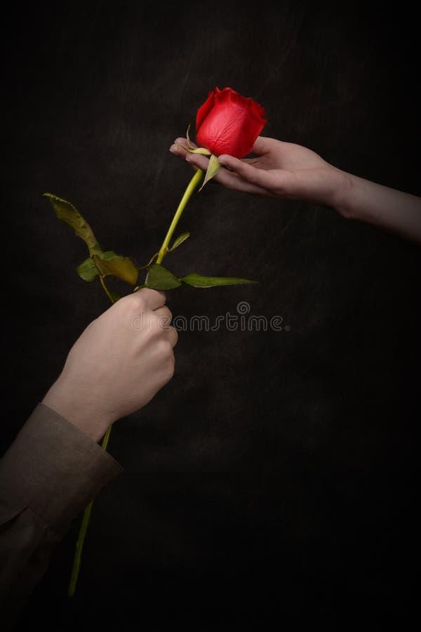 A mão do homem que dá uma rosa foto de stock