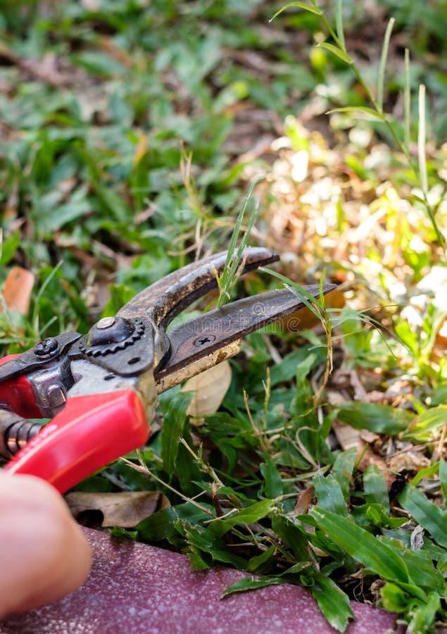 Mão do jardineiro usando os secateurs que cortam a grama foto de stock