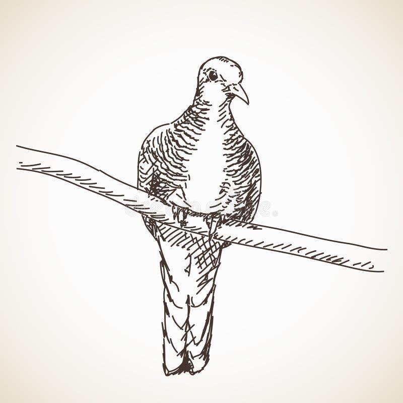 Mão do pássaro da pomba tirada ilustração royalty free