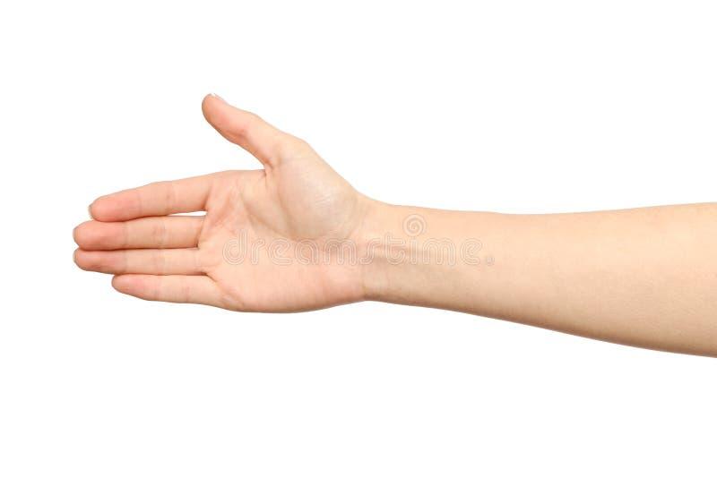 Mão do ` s da mulher que é disposta fazer um acordo fotografia de stock royalty free