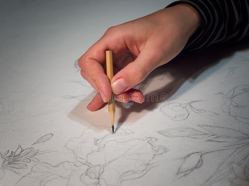 Mão do ` s da mulher que mantém um lápis e uma tiragem flores no watercolo imagem de stock royalty free