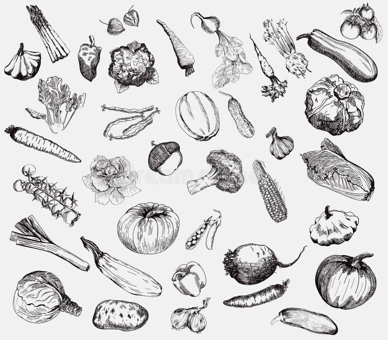 Mão do vetor dos vegetais tirada ilustração stock