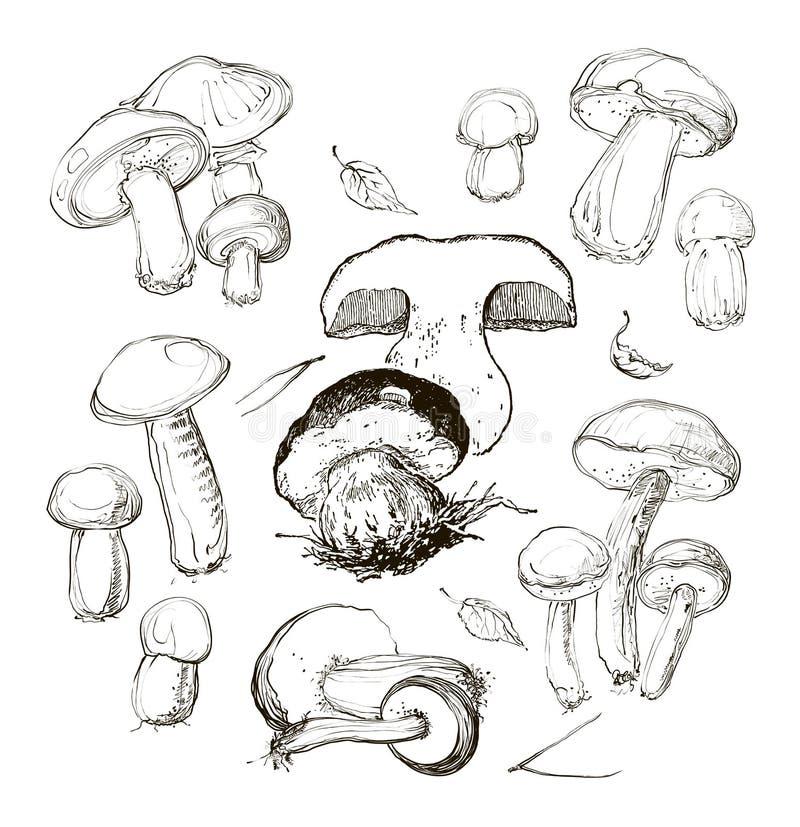 Mão do vetor que tira um grupo de cogumelos ilustração stock